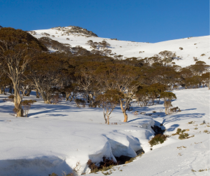 This image has an empty alt attribute; its file name is Falls-Creek-3-300x251.png